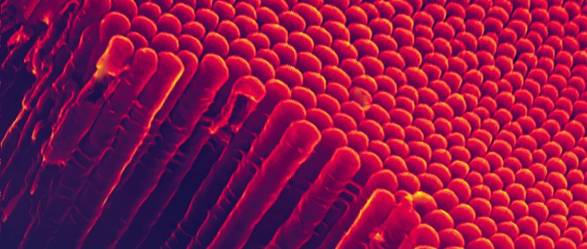 Nanotechnology's Greatest Breakthroughs in Dec 2018